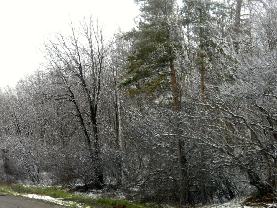 Winter roadside scene