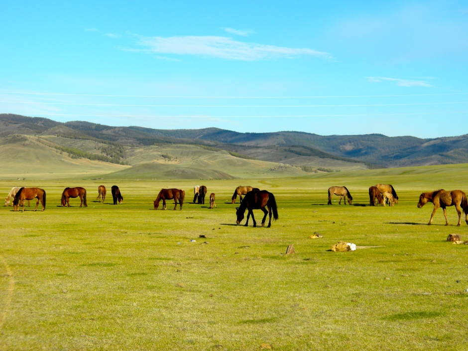 Part of the herd of horses that walked by the tent
