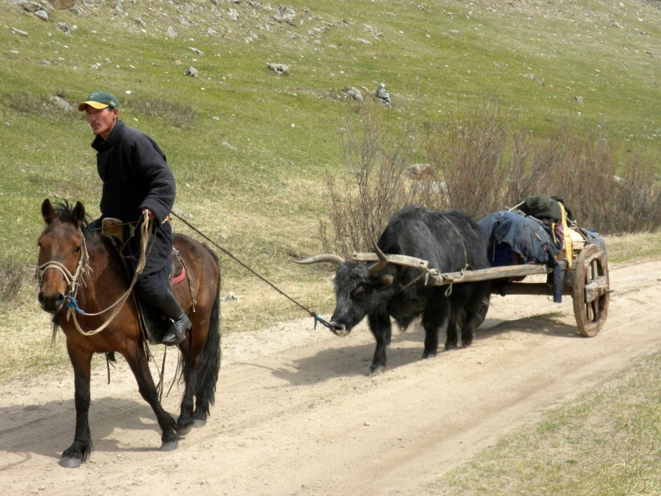 Local gives his Yak a tug to encourage it up the hill with its load