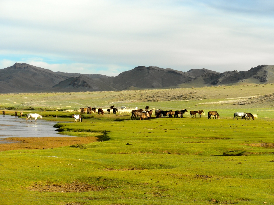 A herd of horses crosses over to our side of the river