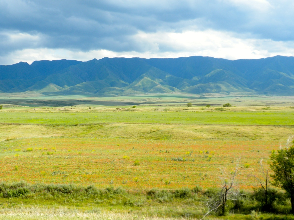Best scenery so far in Kaz - grass meadow with red wildflowers and a hilly backdrop.