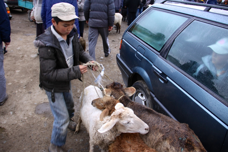 Kids get involved in handling and selling the livestock