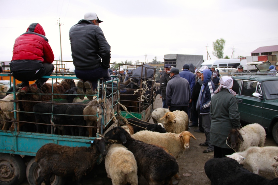 Livestock also arrives in trailers of different sizes
