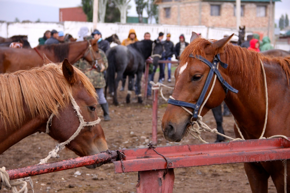 Horses for sale at the market