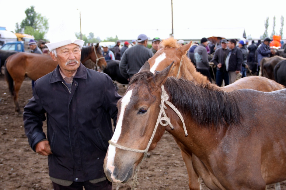 Two horses for sale