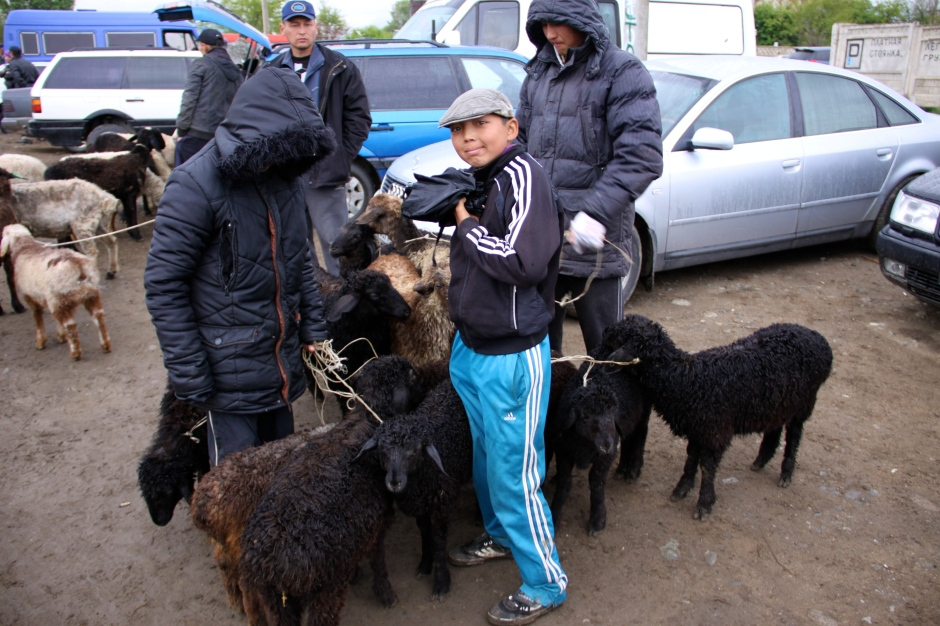 A boy tends to his animals
