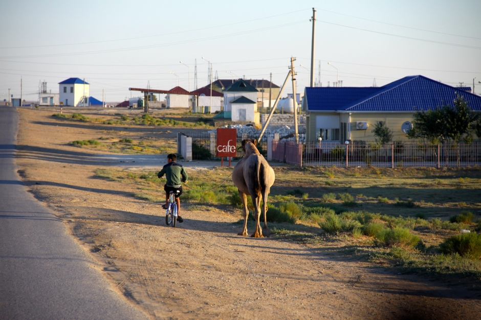Boy takes his camel for a walk whilst riding his bike