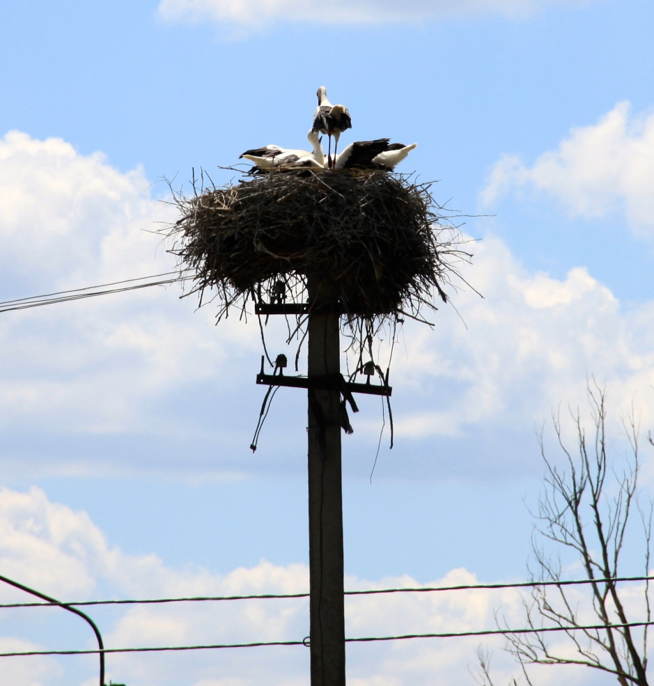 Storks nesting on telephone poles - a sign I'm back in Ukraine