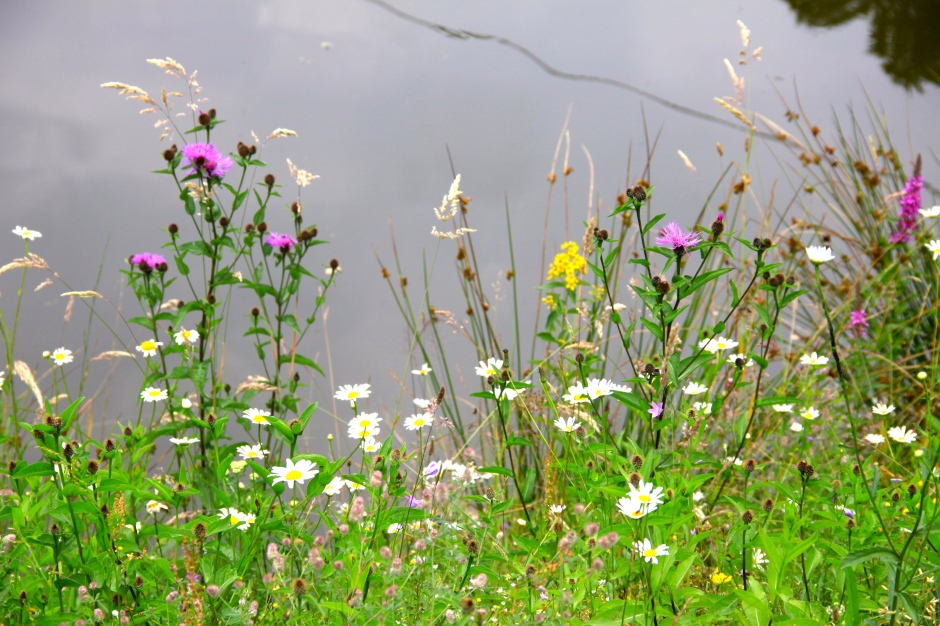 Wildflowers growing by the pond