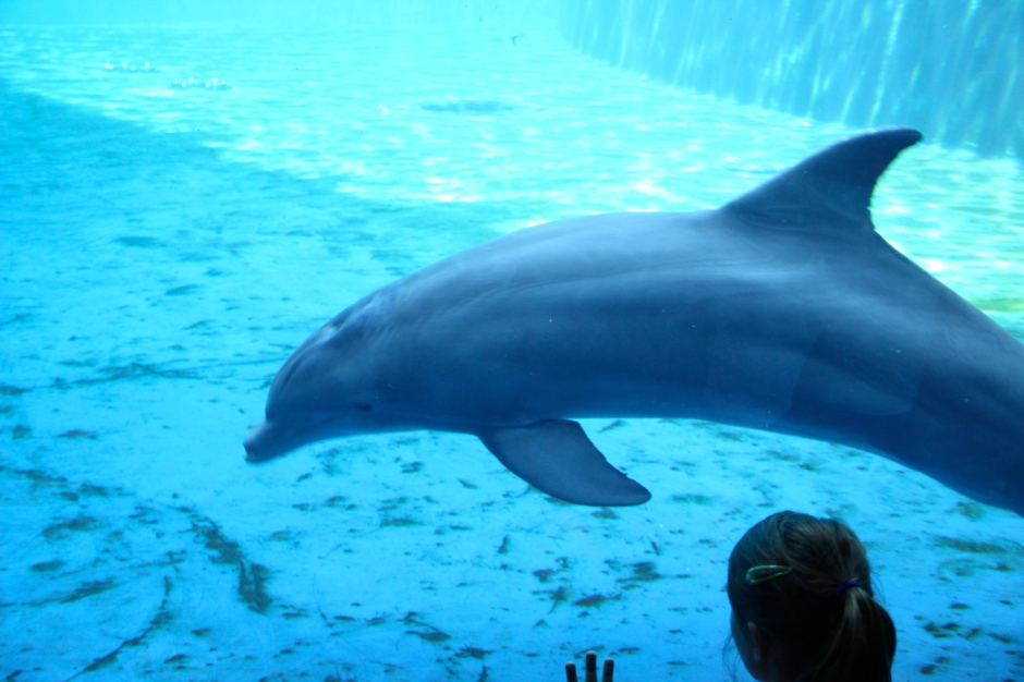 Dolphins kept in bare tanks/pools