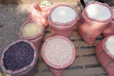 Different varieties of rice