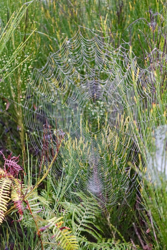 Dew highlights a spider's web
