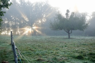 Sun rising behind the horse paddock