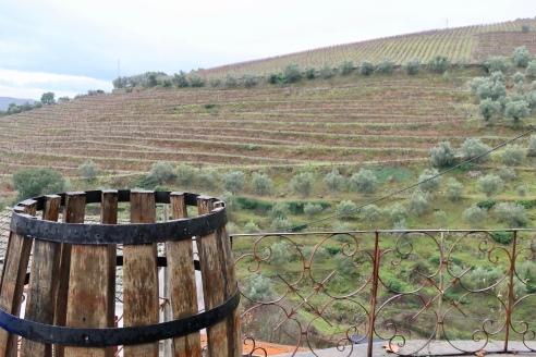 Part of the surrounding vineyards
