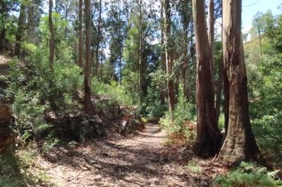 Trail through trees